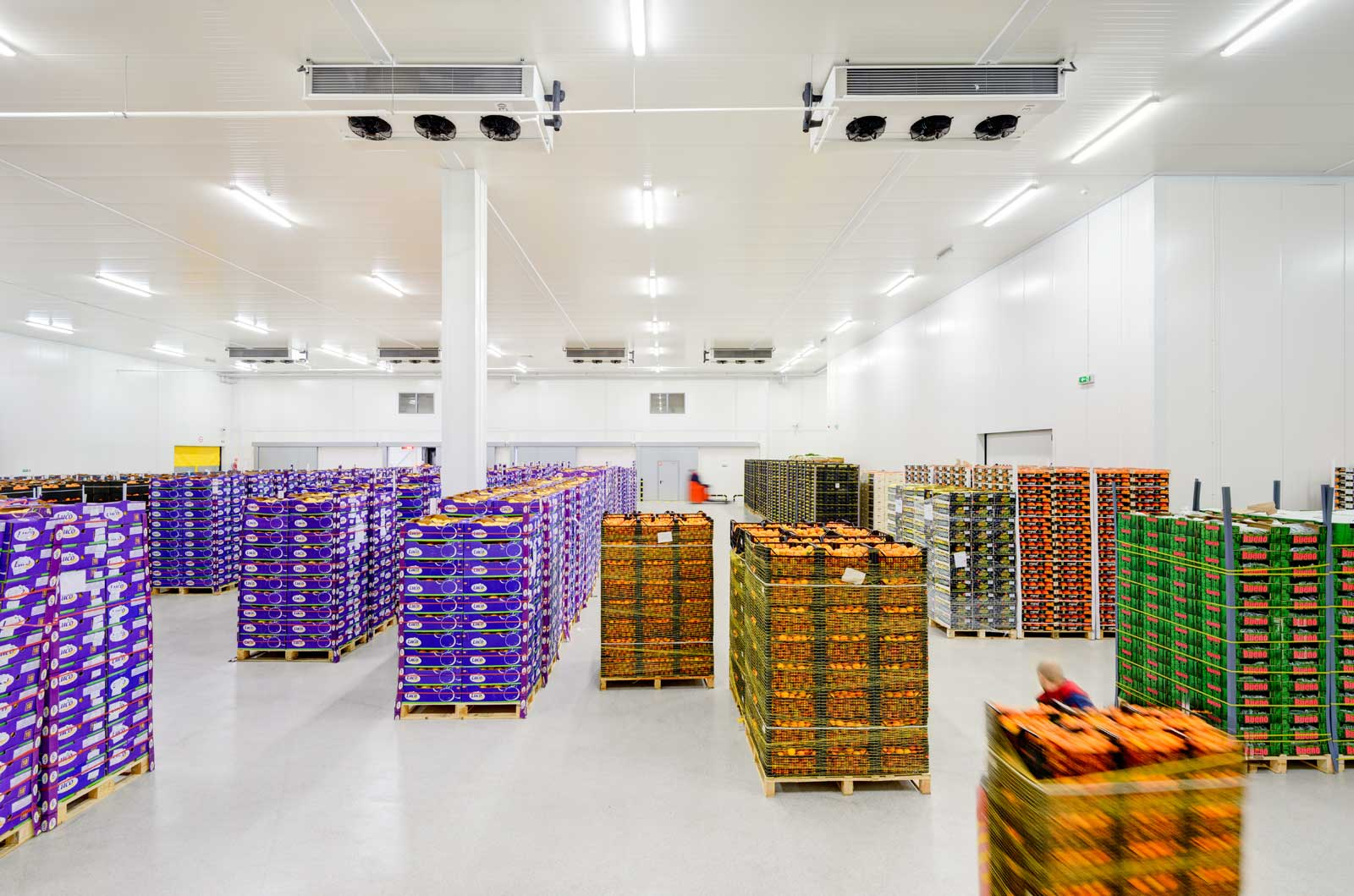 Warehouse with fruit and vegetables